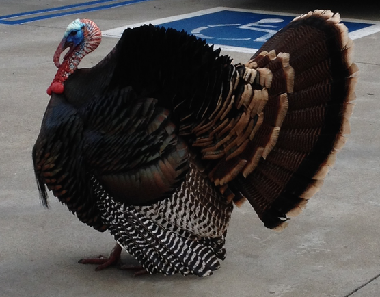 How Many Turkey Stocks Can You Name? The Thanksgiving Stock Portfolio