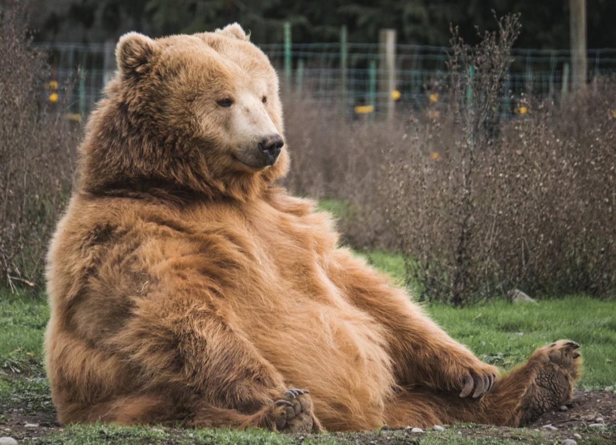 Six Ways to Make Money in a Bear Market